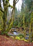 Mos behandelde bomen in het regenwoud Stock Fotografie