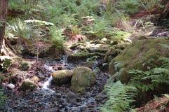 Mos behandelde rotsen bij Snoqualmie-Dalingen Royalty-vrije Stock Foto's