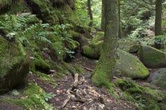 Mos behandelde rotsen en bomen met varens stock afbeeldingen