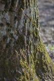 Mos-behandelde schors van een oude boom op een vage grasachtergrond in het bos royalty-vrije stock afbeeldingen