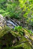 Mos-behandelde stenen in het hout in Altai, Rusland royalty-vrije stock afbeelding