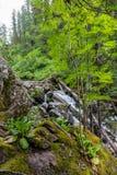 Mos-behandelde stenen in het hout in Altai, Rusland royalty-vrije stock foto's