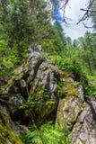 Mos-behandelde stenen in het hout in Altai, Rusland royalty-vrije stock foto