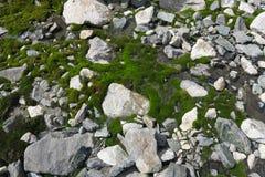 Mos-behandelde Waterval en Pool Mooi mos en korstmos behandelde steen Achtergrond geweven in aard royalty-vrije stock foto's