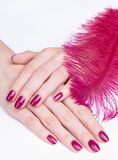 Mãos com manicure e a pena cor-de-rosa Fotos de Stock