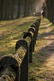 Mos coverd omheining Nature Park Green closs-omhoog royalty-vrije stock afbeelding