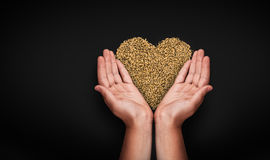 Mãos das crianças com trigo Imagens de Stock Royalty Free