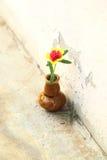 MOS de Rosa no vaso cerâmico Fotografia de Stock Royalty Free