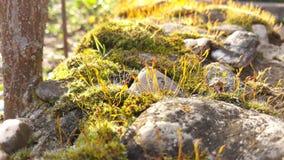 Mos dicht omhooggaand landschap met stenen royalty-vrije stock afbeelding
