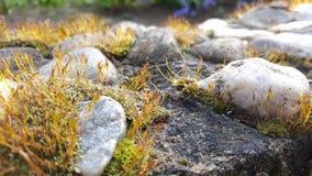 Mos dicht omhooggaand landschap met stenen royalty-vrije stock foto's