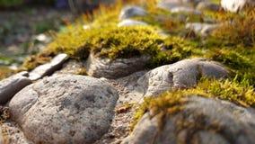 Mos dicht omhooggaand landschap met stenen royalty-vrije stock foto
