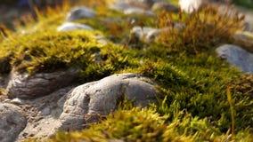Mos dicht omhooggaand landschap met stenen stock foto