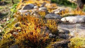 Mos dicht omhooggaand landschap met stenen stock foto's