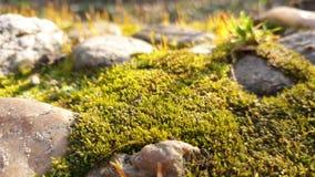 Mos dicht omhooggaand landschap met stenen royalty-vrije stock afbeeldingen