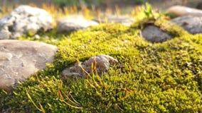 Mos dicht omhooggaand landschap met stenen stock afbeelding