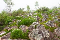 MOS e fiore su moutain di pietra Fotografie Stock Libere da Diritti