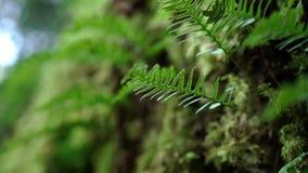 Mos in een bos stock videobeelden
