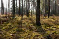 Mos in een bos tijdens zonnige dag Royalty-vrije Stock Afbeelding