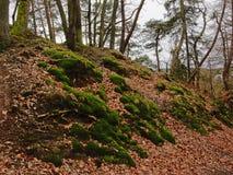 Mos en droge bladeren op de bosvloer royalty-vrije stock foto