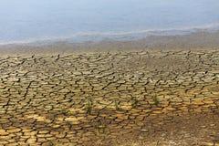 Mos en droog land Stock Afbeelding