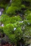 mos en gras stock afbeeldingen