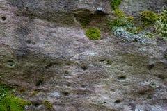 Mos en korstmos het groeien op de rots stock afbeeldingen