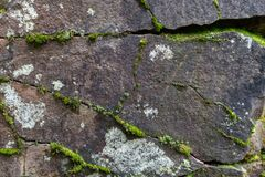 Mos en korstmos het groeien op de rots stock afbeelding