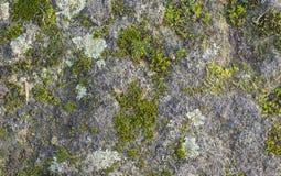 Mos en korstmos het groeien op een rots Stock Foto's
