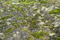 Mos en korstmos het groeien op een rots Stock Afbeelding