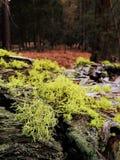 Mos en korstmos op schors van gevallen boom in bos royalty-vrije stock afbeeldingen
