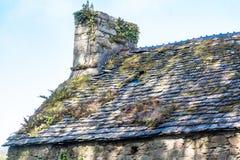 Mos en korstmossen op een oud dak stock afbeelding
