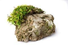 Mos en rots op witte geïsoleerde achtergrond stock fotografie