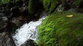 Mos en varen in regenwoud stock videobeelden