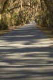 Mos gedrapeerde bomen in Harris Neck National Wildlife Refuge, Georg stock foto
