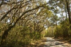 Mos gedrapeerde bomen in Harris Neck National Wildlife Refuge, Georg royalty-vrije stock afbeeldingen