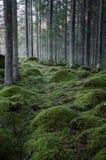 Mos-gekweekte rotsen in een naaldbos Stock Afbeeldingen