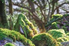 Mos het groeien in bos royalty-vrije stock foto