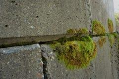 Mos het groeien op beton royalty-vrije stock foto's