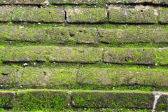 Mos het groeien op bruine bakstenen muur Stock Fotografie