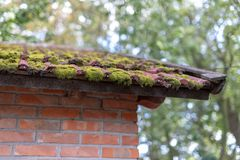 Mos het groeien op tegels op een oud gebouw Een oud dak op een landbouwbedrijf stock foto's