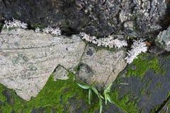 Mos het groeien tussen baksteenbestrating stock afbeelding