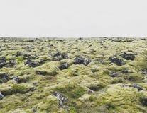mos IJSLAND van het lava het vulcanic gebied Stock Afbeelding