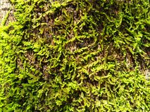 MOS mit Baum lizenzfreies stockfoto
