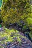 Mos op boomachtergrond stock afbeeldingen