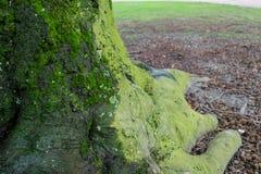 Mos op boomstam van boom stock fotografie