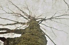 Mos op de boom Stock Afbeeldingen