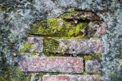 Mos op de oude bakstenen Stock Afbeeldingen