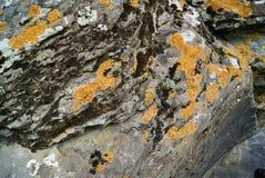 Mos op de rots in berg Royalty-vrije Stock Foto