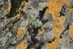 Mos op de rots in berg Stock Fotografie