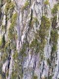 Mos op de schors van een boom stock afbeeldingen
